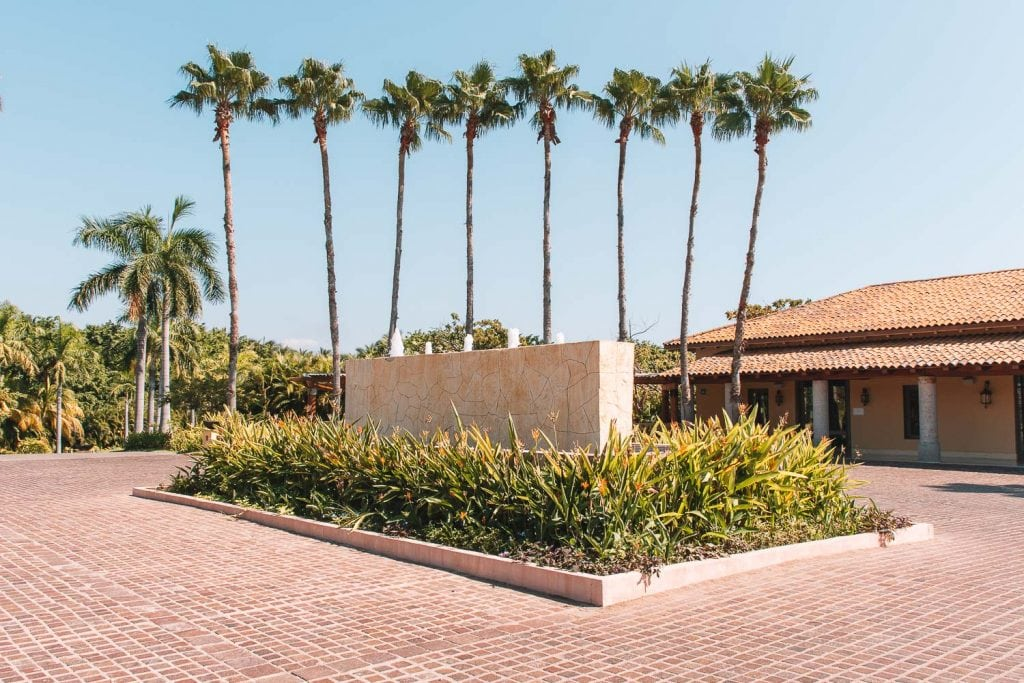 driveway of palm trees at the st regis punta mita resort